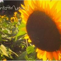 Oh...Bunga Matahari