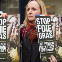 Foie Gras - Hati Angsa Yang Mengenaskan