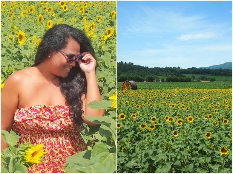 Ladang Bunga Matahari Prancis Selatan